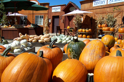 Pumpkins at Jack Creek Farms