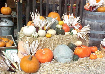 Assorted Pumpkins and Winter Squash at Jack Creek Farms